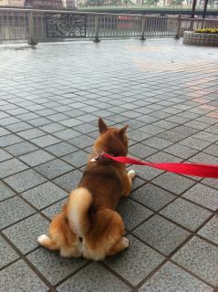 雨だとつまんないなあ〜