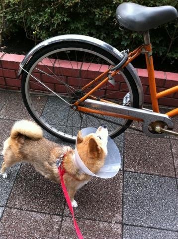 みかんも自転車のペダルを踏んでみたいなあ